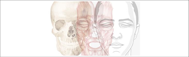 Anatomía | USALbiomédica